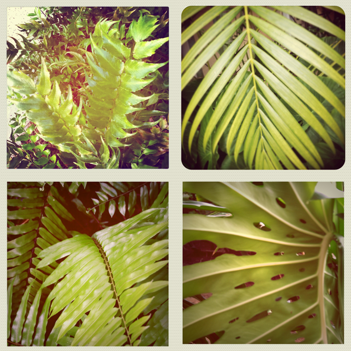 INSPIRATION | Green Palm Leaves