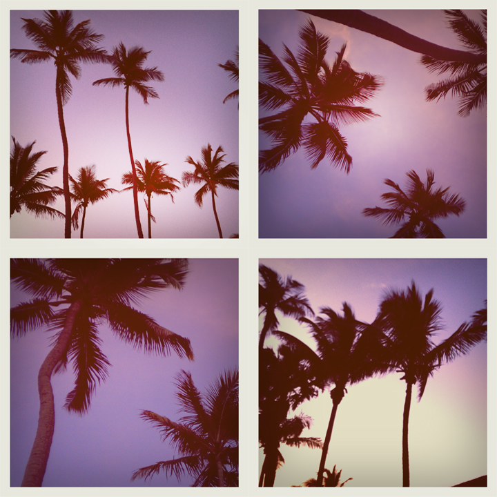 INSPIRATION | Purple Palm Trees
